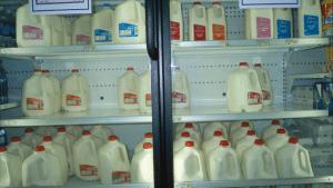 alimentation lait pasteurisé